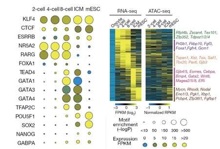 atac-seq技术可以测序什么?研究表观遗传别错过图