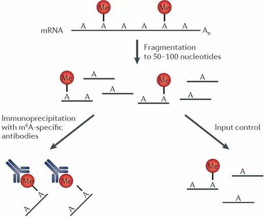 RNA甲基化