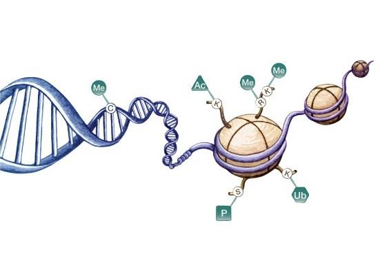 表观遗传学的研究对一些药物的开发有一定的作用图