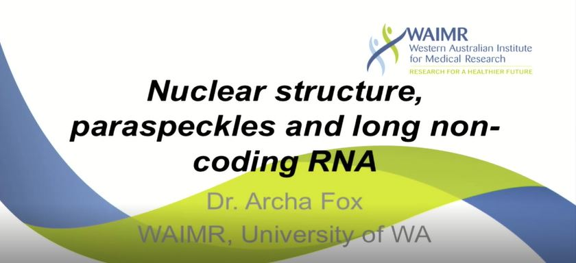Nuclear structure, paraspeckles and long non-coding RNA--Archa Fox图