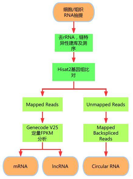 LongRNA-seq服务上线通知图