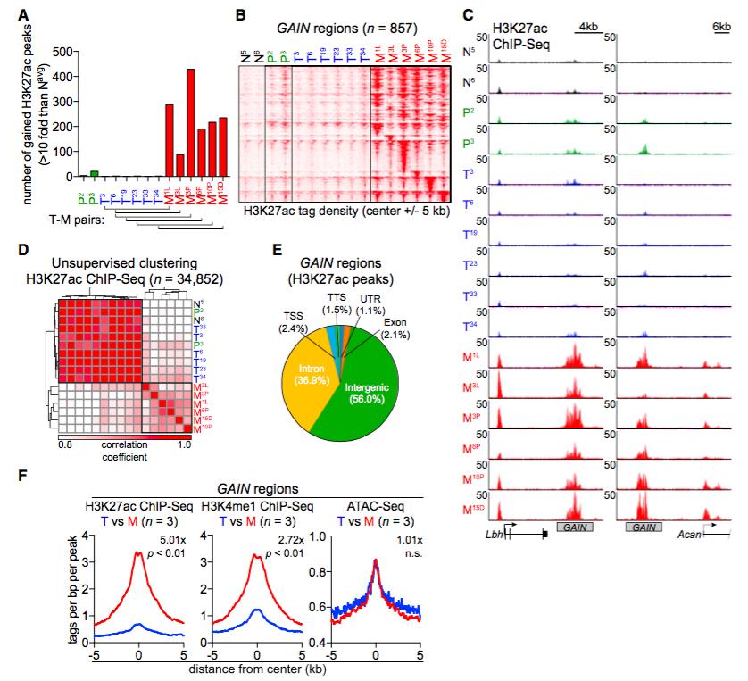 Enhancer案例| Cell: 胰腺癌将增强子重编程,促进肿瘤转移图