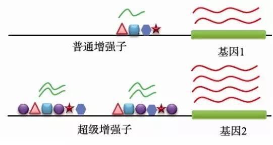 """新发现!不为人知的 """"超级lncRNA""""图"""