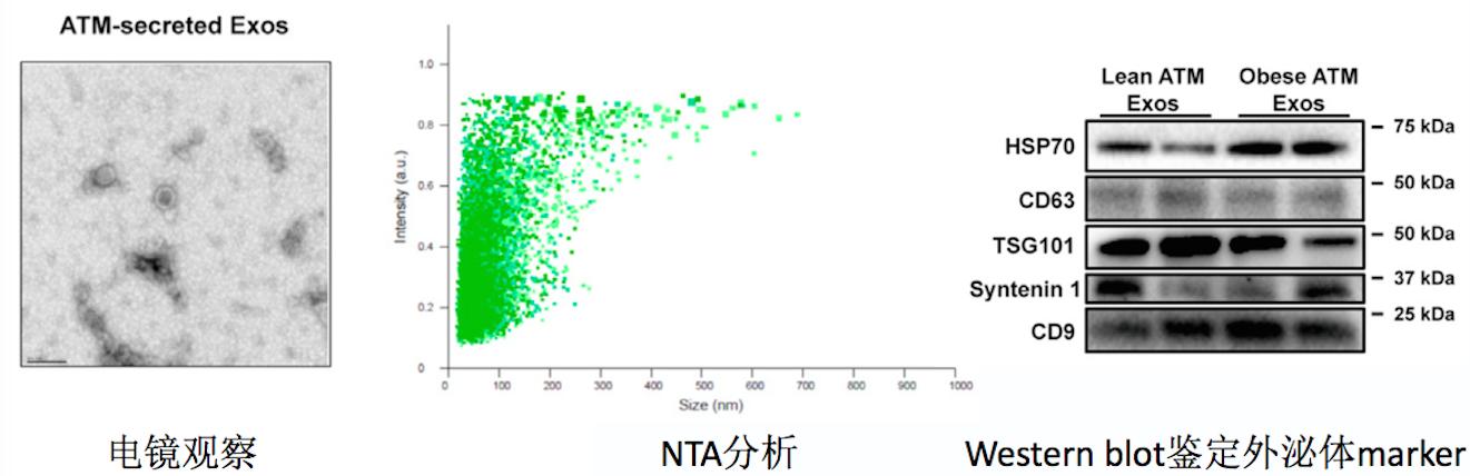 这篇 Cell 文章告诉你如何研究外泌体 miRNA图