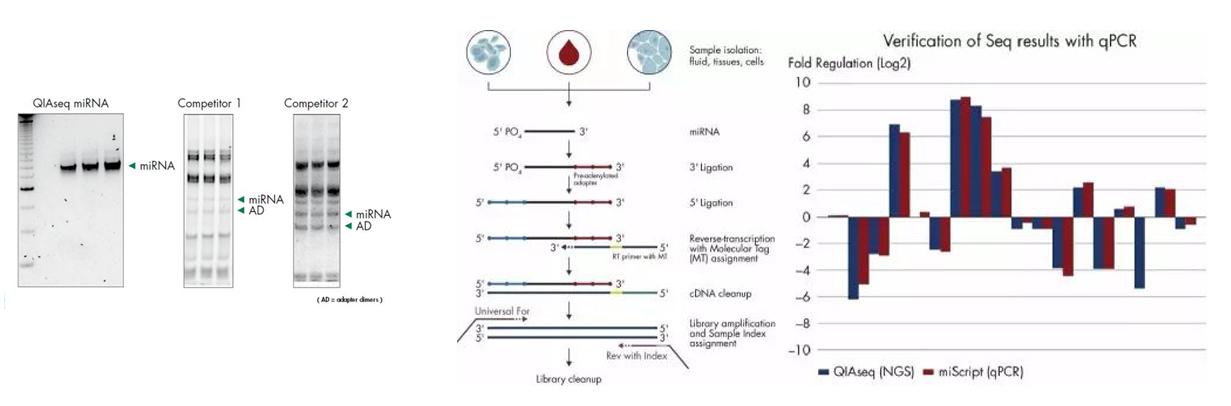 新品发布|外泌体small RNA测序服务图