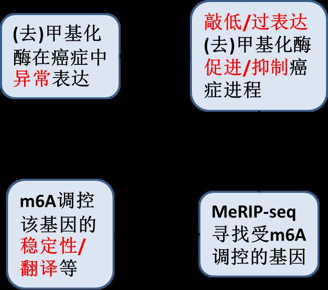 m6A正火,ac4C又至!详解Cell最新ac4C研究图