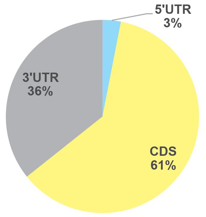 【促销】微量meRIP-seq联合SLAM-seq、Ribo-seq,深入解析RNA甲基化靶点与作用机制图