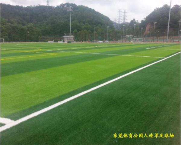 东莞东城体育馆-足球馆图