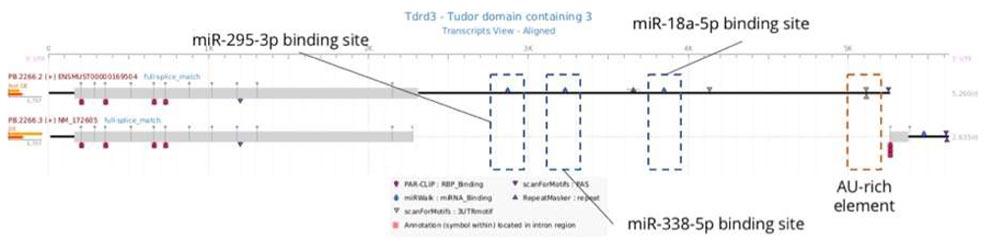 展示与解读2:Iso-Seq高级定制分析
