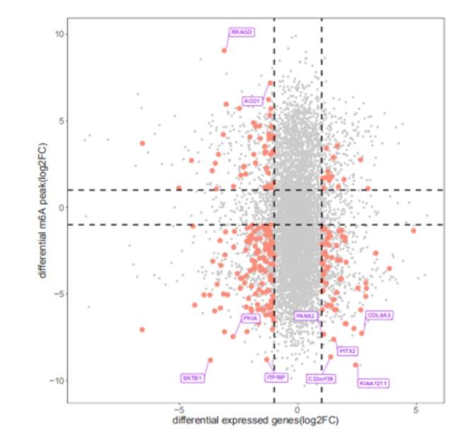 表观实测数据6