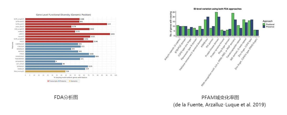 展示与解读2:Iso-Seq高级定制分析 图