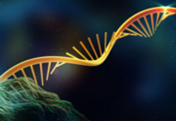 GRO-seq(新生RNA-seq)服务图