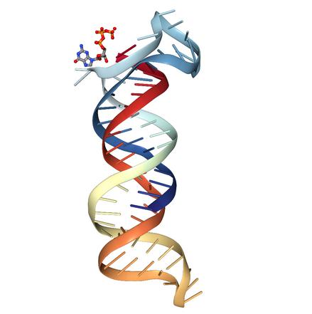 LongRNA-seq(circRNA+lncRNA+mRNA)图