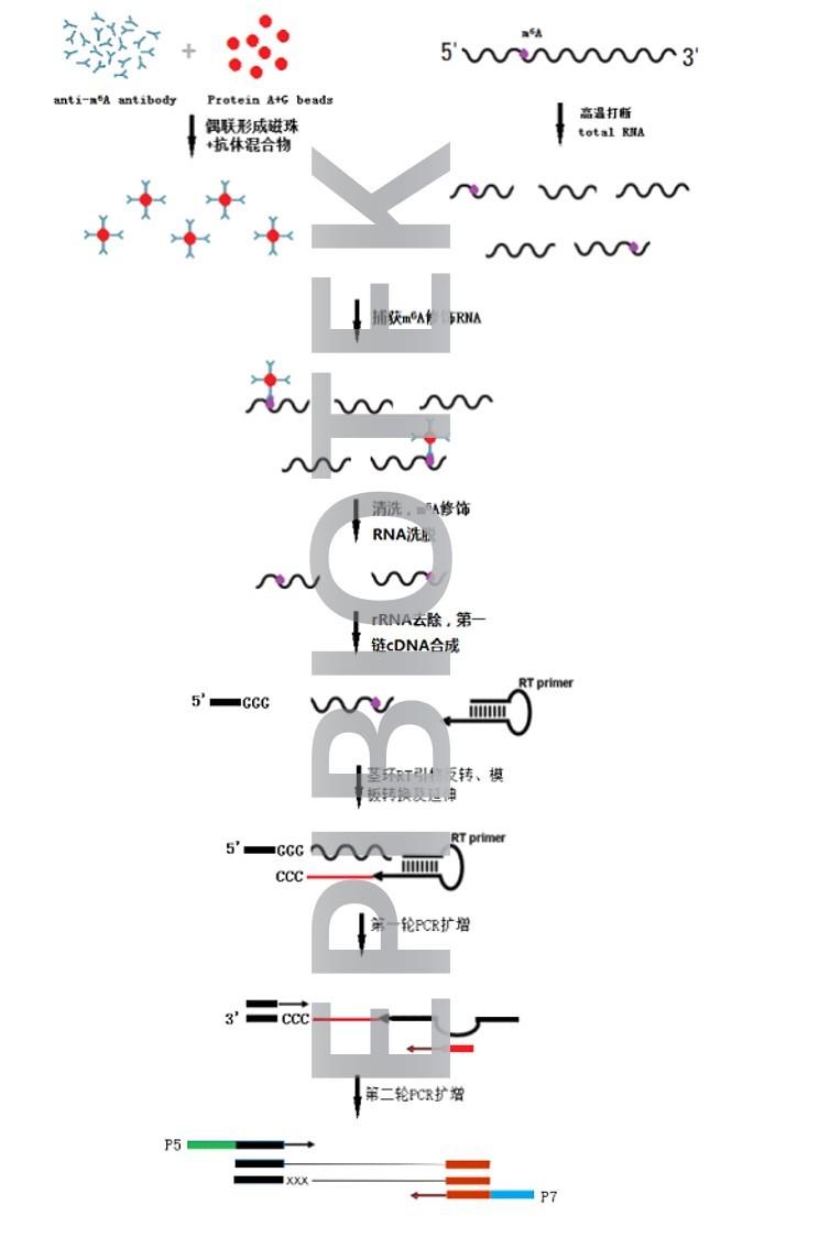 外泌体RNA甲基化测序服务图