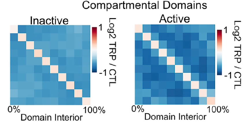 由于转录状态和结构域组织高度相关,所以测试了转录的抑制是否影响区室结构域的形成。用雷公藤内酯和热休克抑制转录,前者抑制转录起始,后者抑制整个转录。 (A)来自雷公藤内酯醇处理的细胞的10kb分辨率的Hi-C热图显示,区室结构域内的信号减小 。 (B)尽管两者都导致大多数或所有基因的转录沉默,但受热休克的细胞中结构域结构的减少似乎比雷公藤内酯治疗更明显 。 Hi-C元图比较发现,活跃结构域比失活结构域交互减少的更多