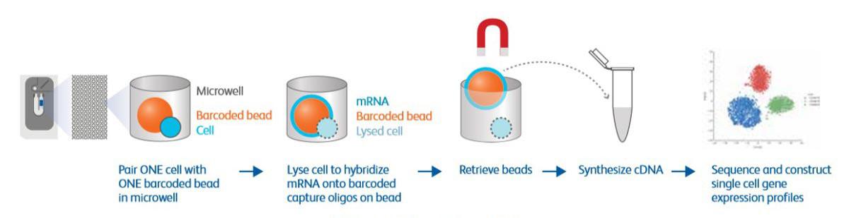 单细胞免疫组库研究方案